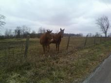 horses near schoolhouse.2013